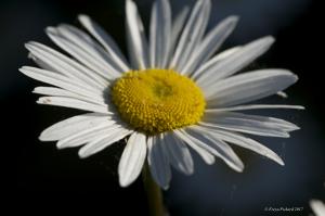 flower_pat_july